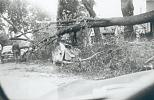 Name: Maria St. just west of Mitton St. - 21 May 1953 by snap-happy1.jpg    